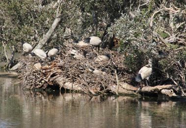 wetland_bird1411