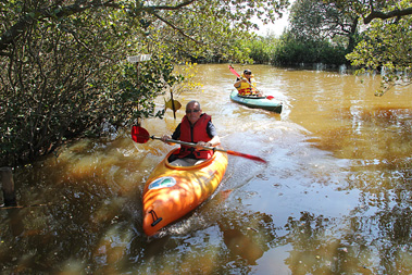 wetland_canoe1411